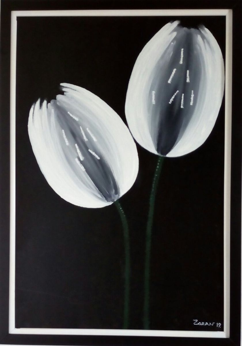 A pair of white tulips