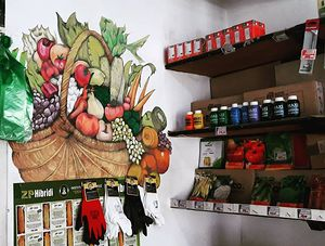 Drawing a basket with fruits and wegetables on the wall