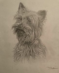 Drawing of West Highland White Terrier