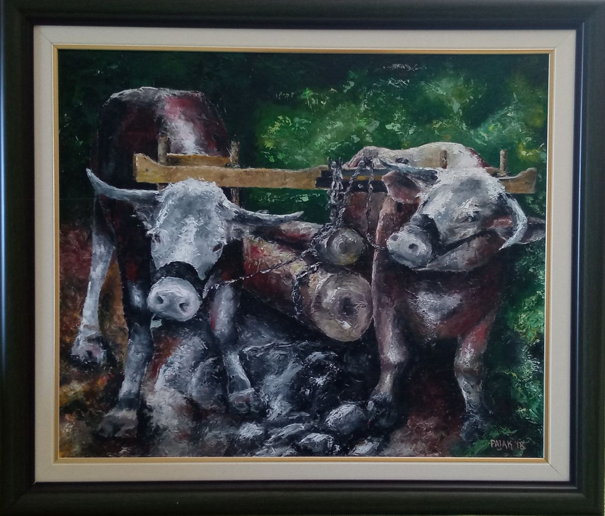 Oxen at work