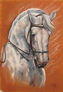 Portrait of Lipizzaner