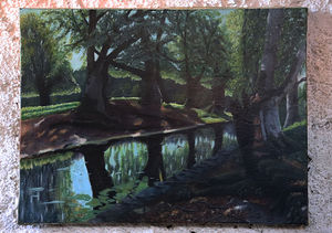 River in the forest