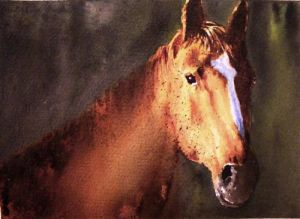 Semi-profile  of horse