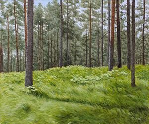 Summer in the Pine Forest
